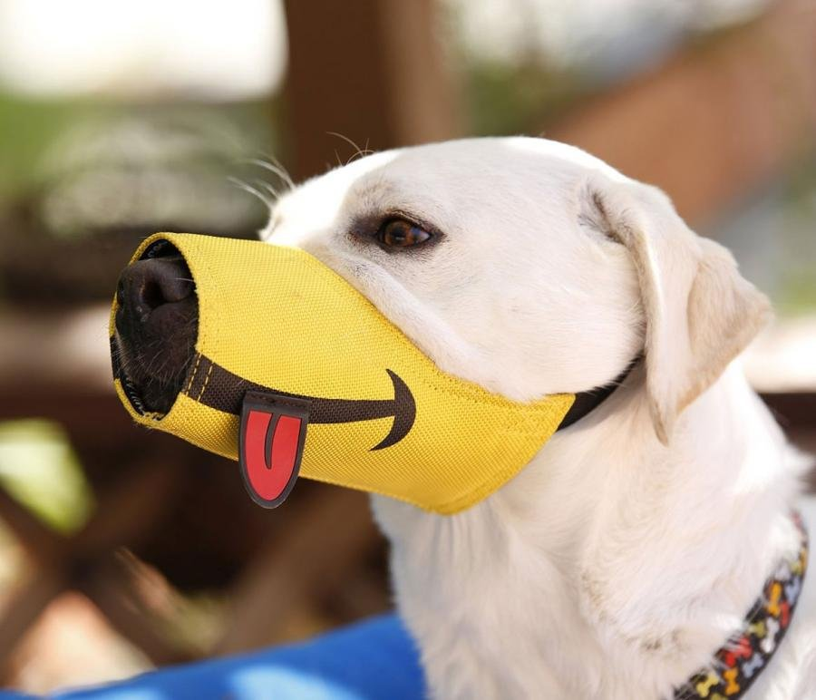 dog wearing muzzle with a cartoon drawing on the muzzle to look as if the dog is smiling